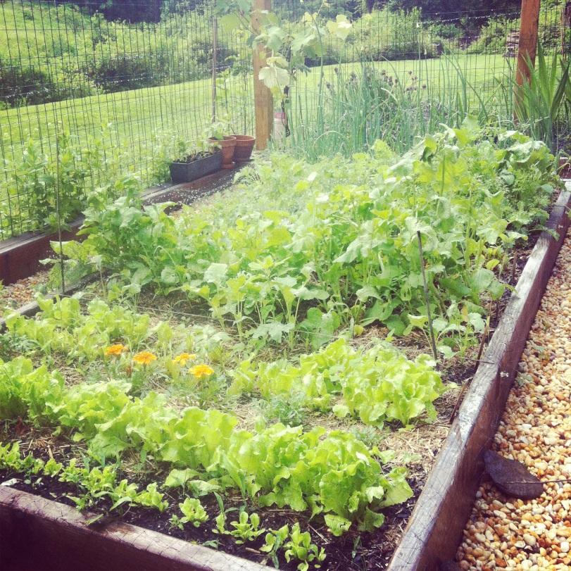 Nadia's gorgeous garden